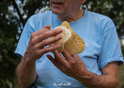 Activitat El món de les abelles de Drac Actiu