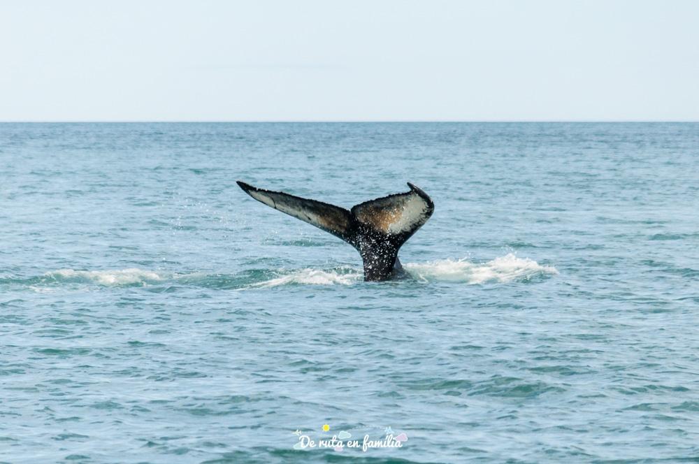 balenes husavik islandia