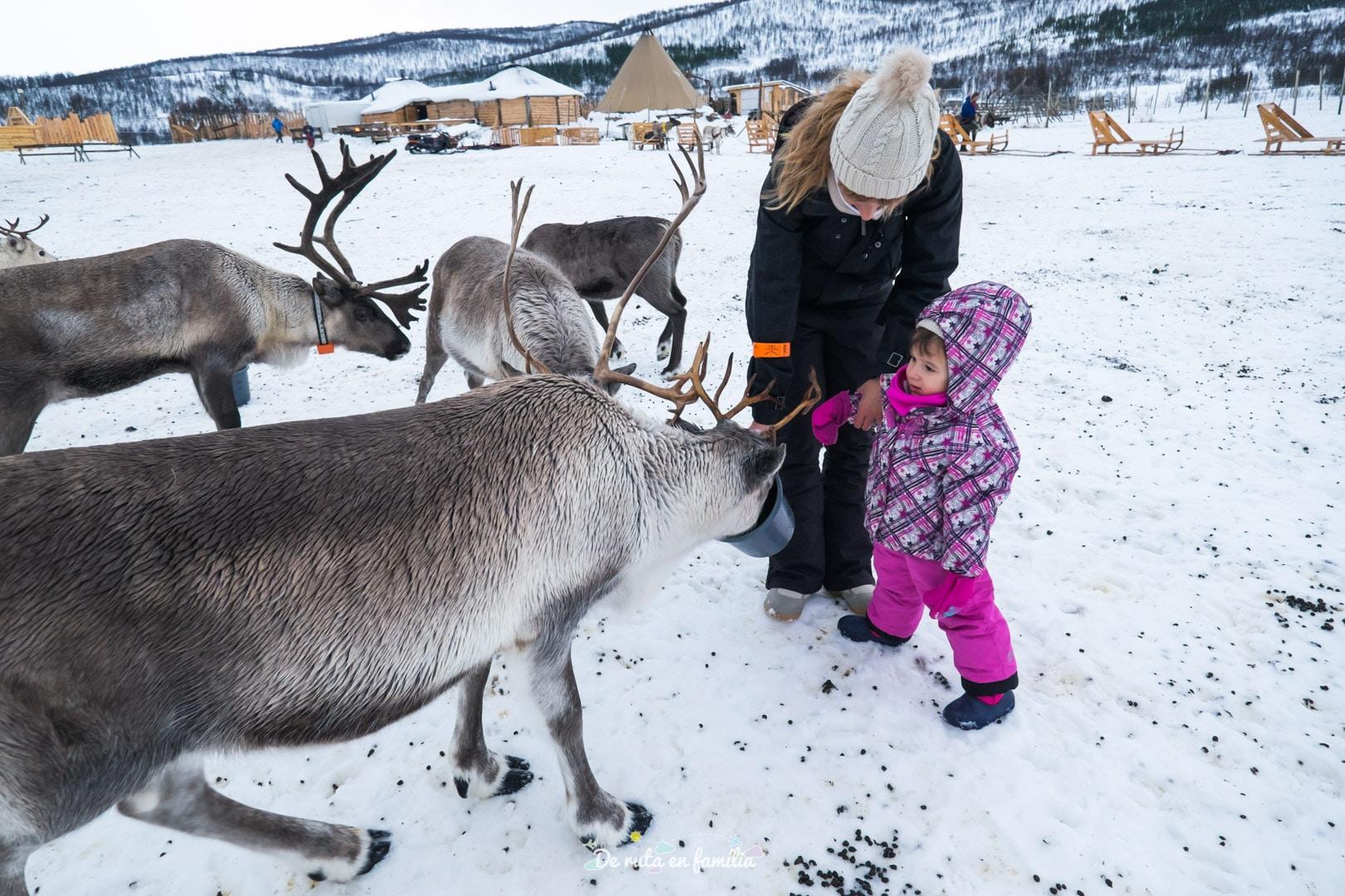 Granja de rens a Tromso