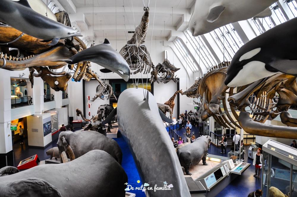 Museu d'Història Natural de Londres