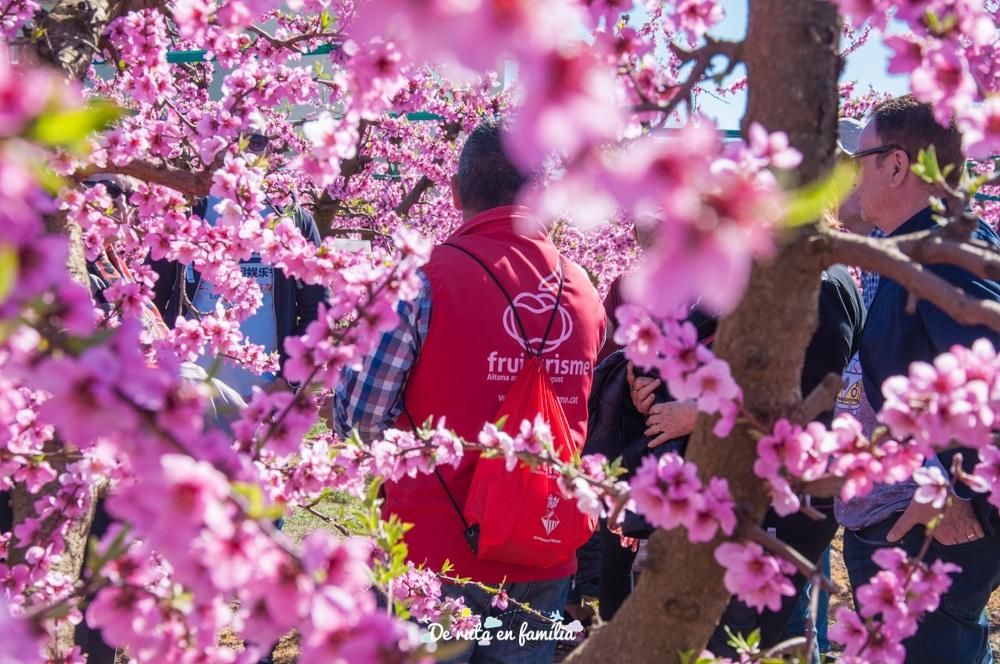 ruta de la flor del presseguer a Aitona amb Fruiturisme