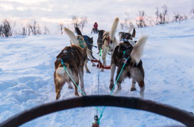 trineu de gossos a Tromso