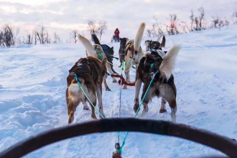 Excursió en trineu de gossos a Tromso amb nens