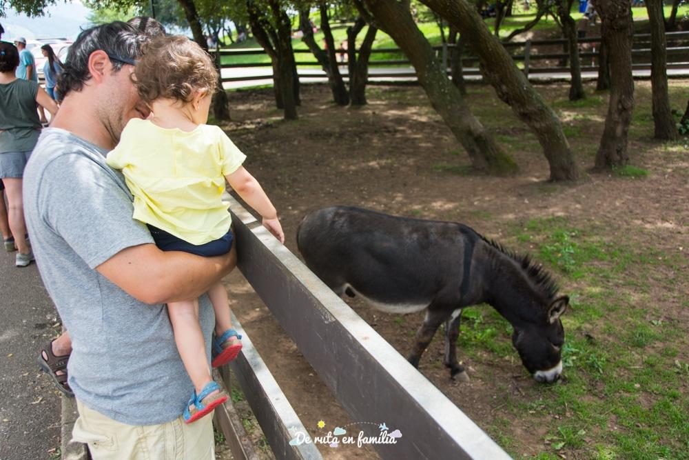 visitar cabarceno amb un bebe