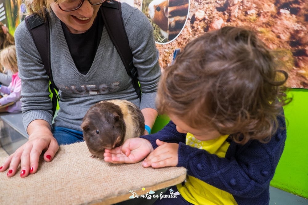 visitar cotswolds farm park amb nens