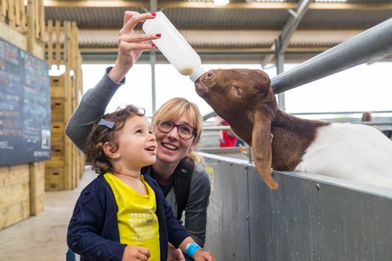 La nostra experiència visitant la Cotswolds Farm Park amb nens